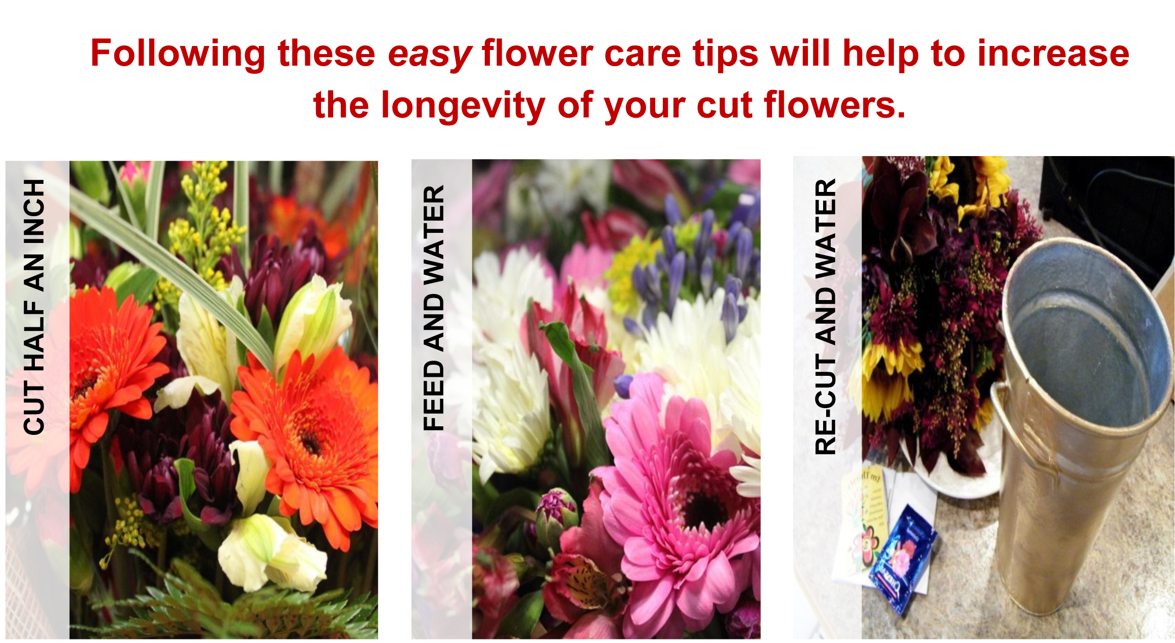 Floral care make scents flowers certain varieties of cut flowers last longer than others carnations for example can remain vibrant for long periods roses have a shorter vase life reviewsmspy
