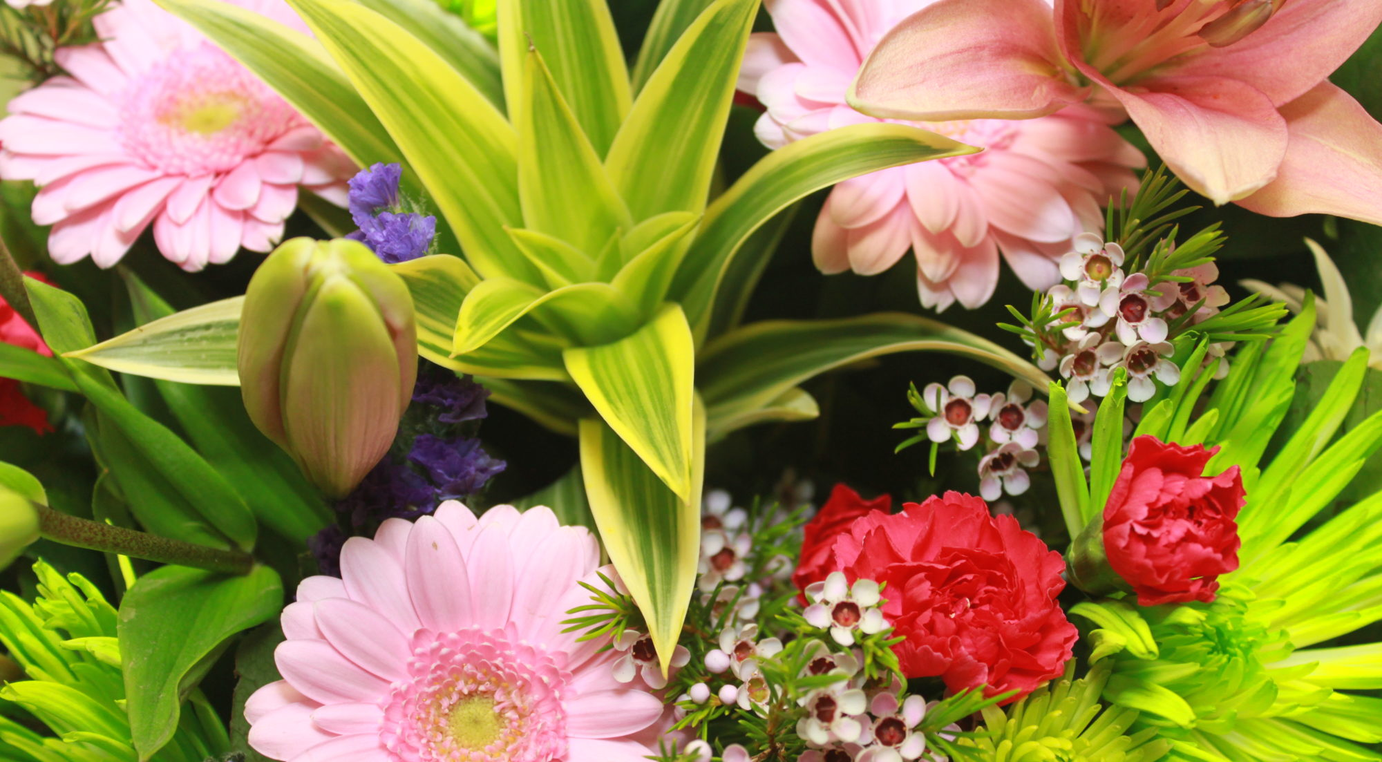 Image result for Produce Your Flowers Last Longer With Bloom Distribution